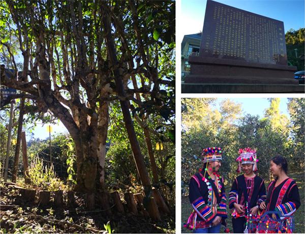 扎根深山老林 锐骐皮卡村传承五千年茶文化